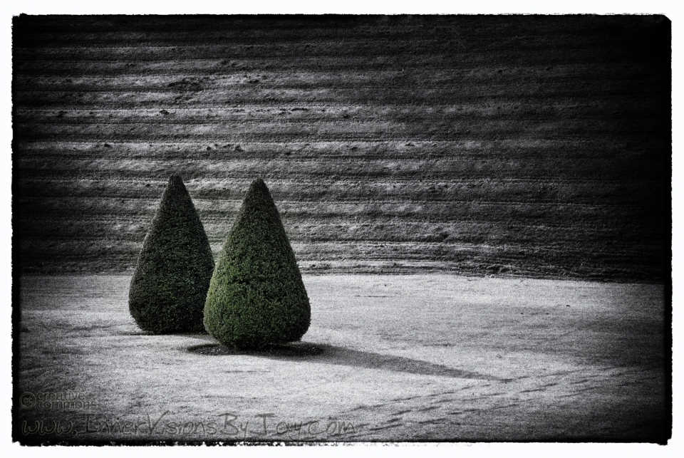 Green cone-shaped bushes against black and white Vignette